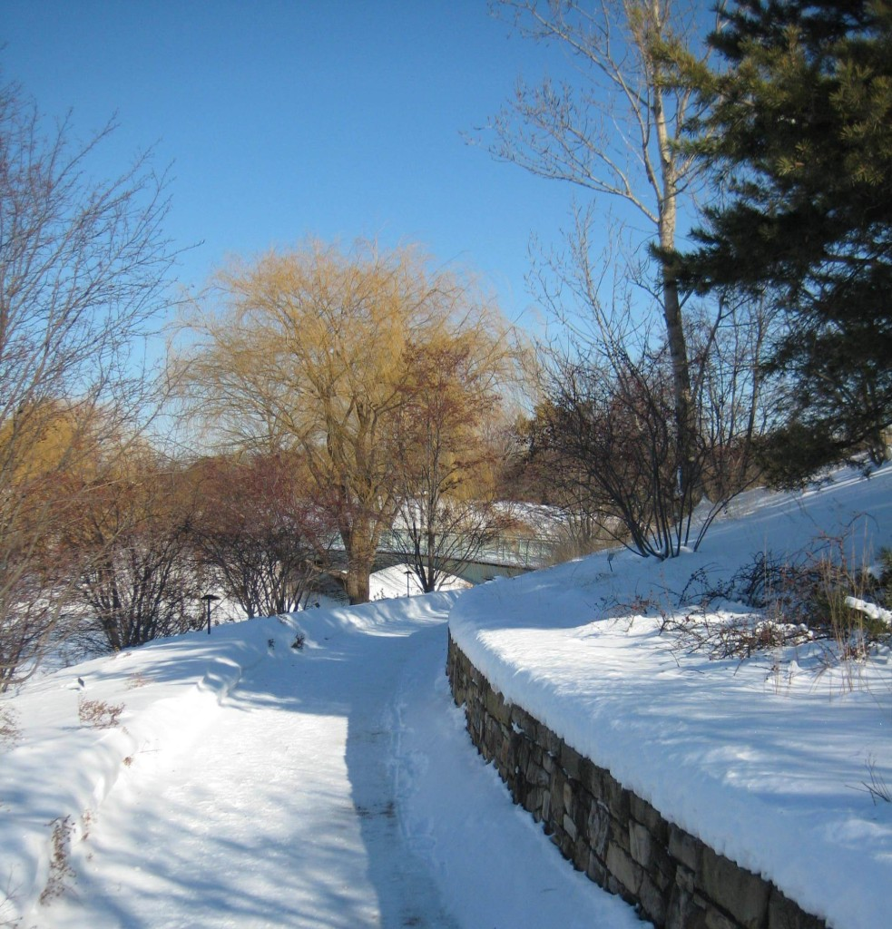 botanic garden winter path